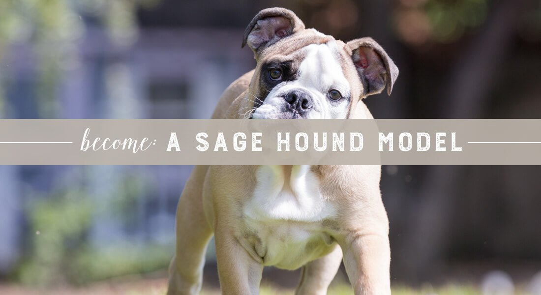 become-a-sage-hound-model