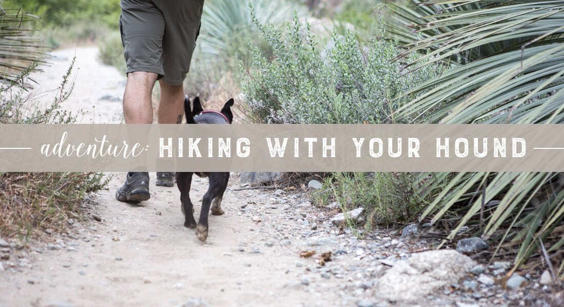 hiking with your hound