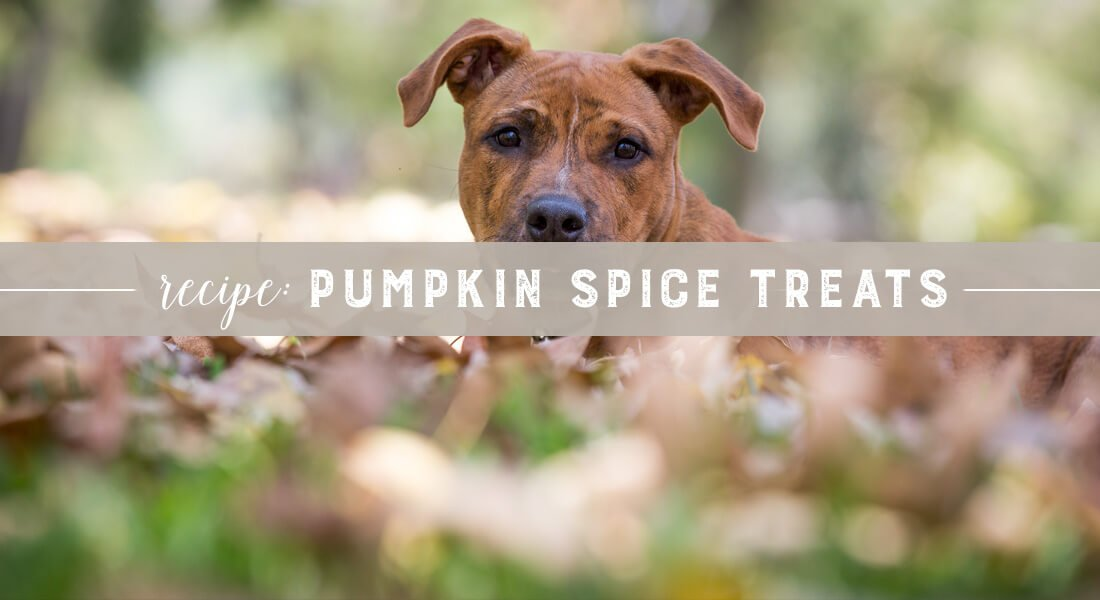 pumpkin-spice-treats