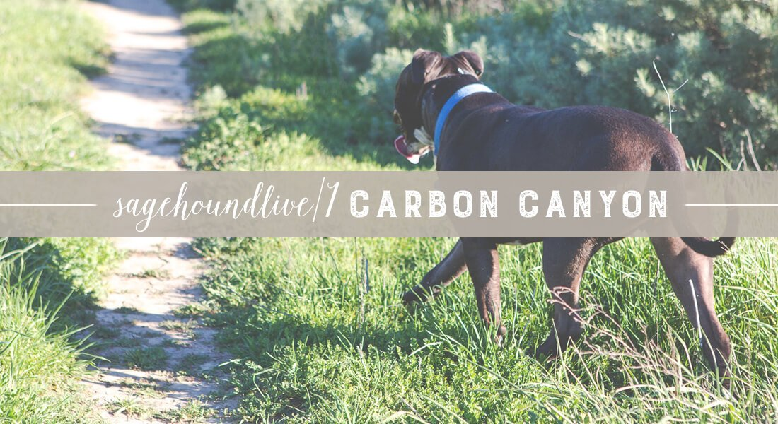 hiking-carbon-canyon