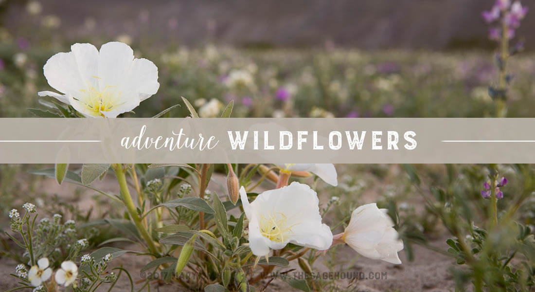 Adventure wildflowers