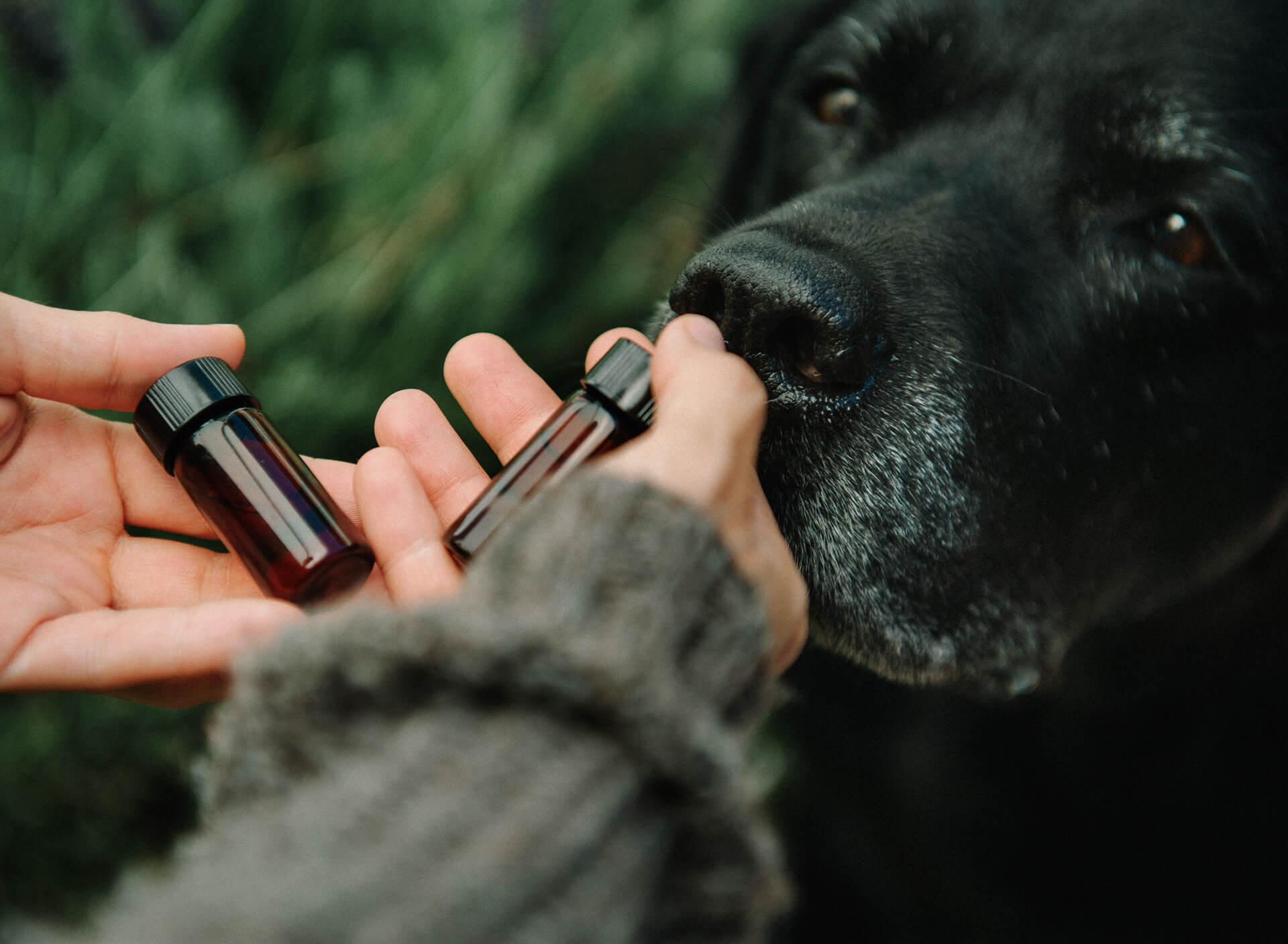 Essential-Oils-for-your-Dog