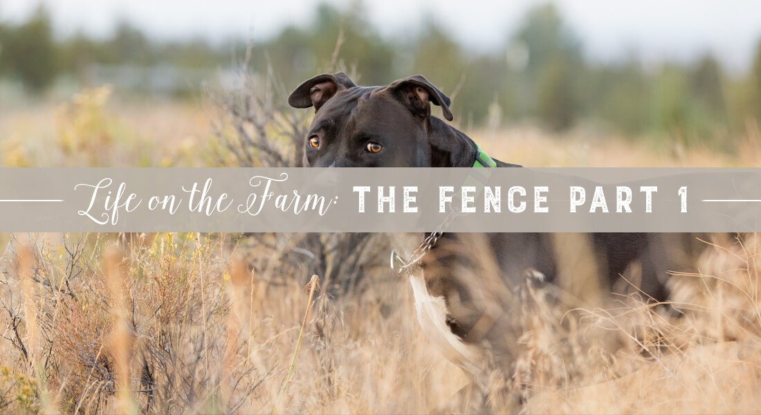 The-Fence-part-1