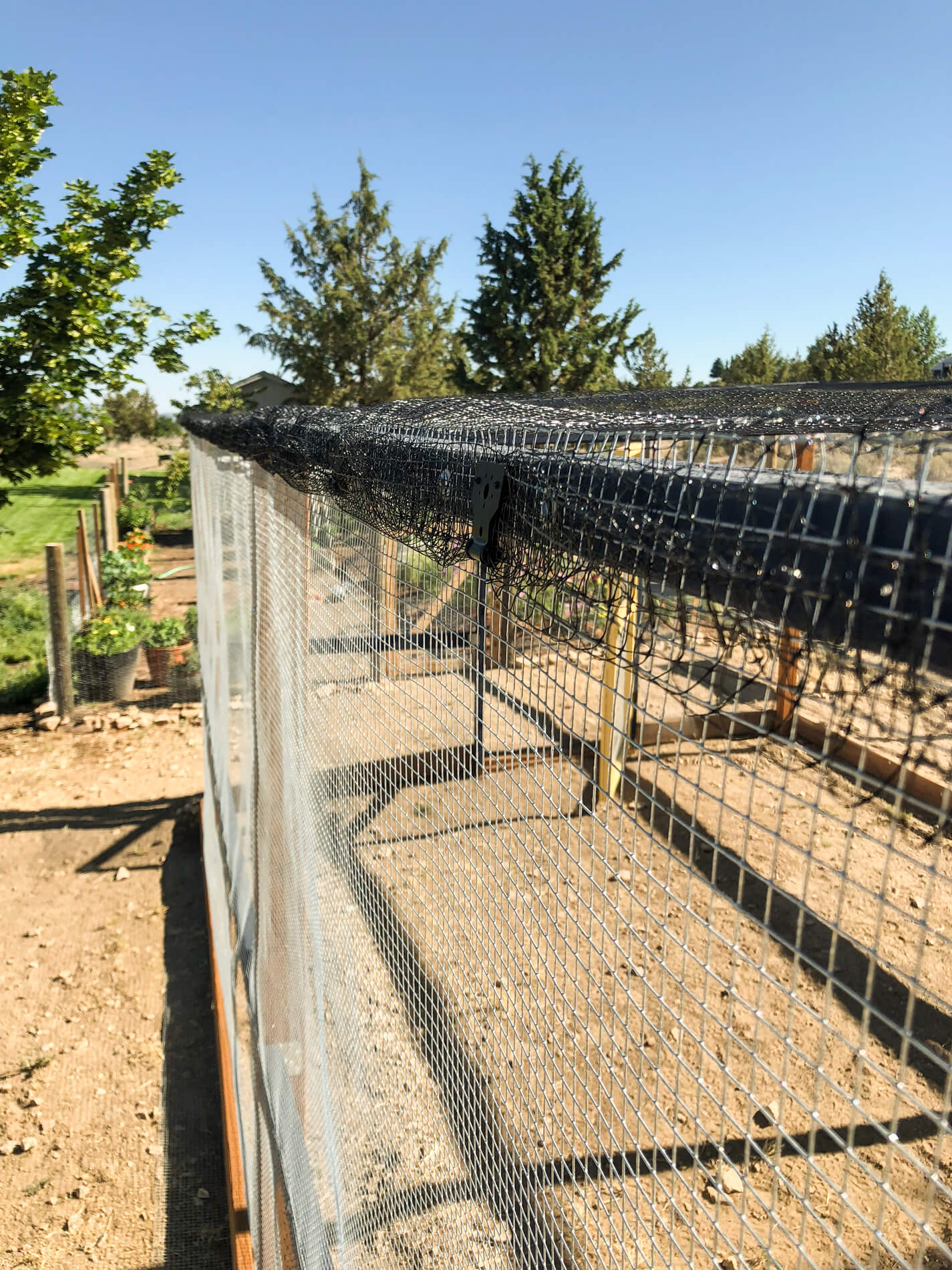 poultry-netting-on-roof-of-chicken-run